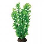 """Растение Laguna """"Людвигия"""" зеленая, 100мм"""