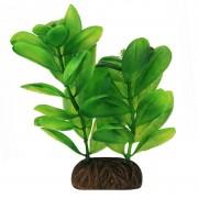 """Растение Laguna 1363 """"Самолюс"""" зеленый, 100мм, (пакет)"""